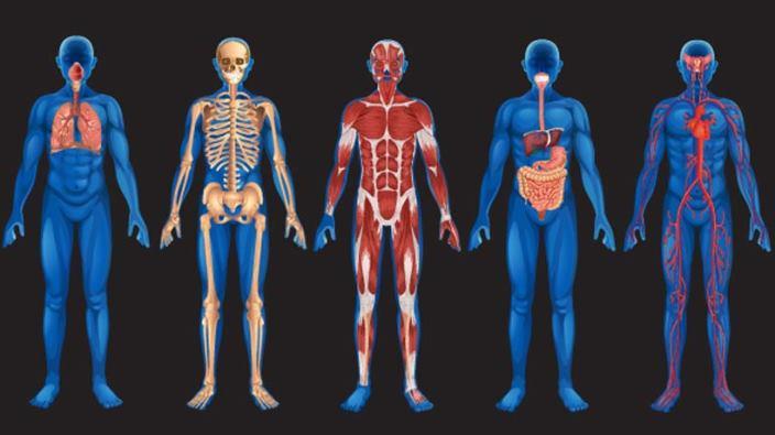 Apgāžam mītus: Vai cilvēka ķermenis tik tiešām sevi atjauno pilnībā ik pēc 7 gadiem?