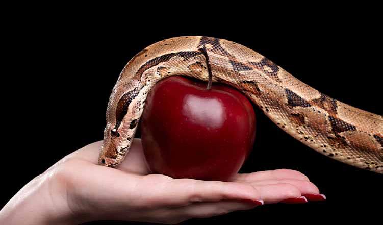Snake-Apple