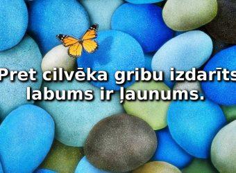 Butterfly-on-colorful-rocks-wallapaper