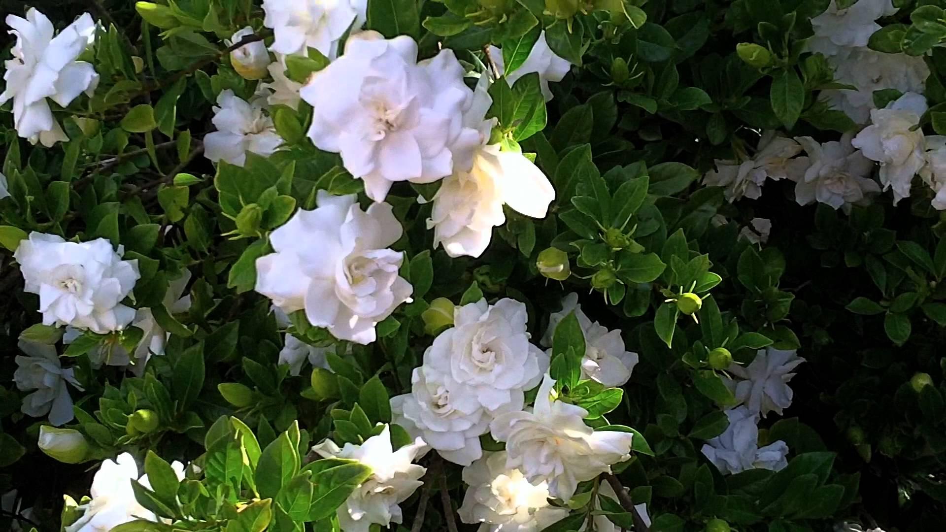 Ziedi, kas piesaista mīlestību un gaisina skumjas. Kuri tie ir?