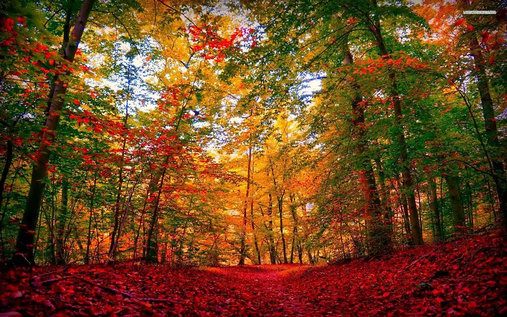 Ēdiens – svarīgs, bet ir arī citi enerģijas avoti. Kā rudenī uzlādēties ar krāsu enerģijām?
