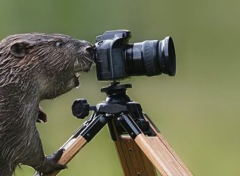 20-adorable-animals-that-want-to-be-photographers-6