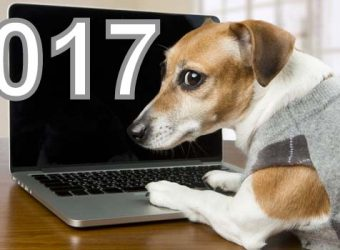 dog-looking-through-dogs-supplies-websites