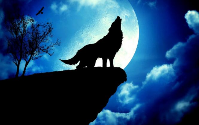 11. maijā gaidāms vilku pilnmēness: lūk, kas tev par to jāzina!