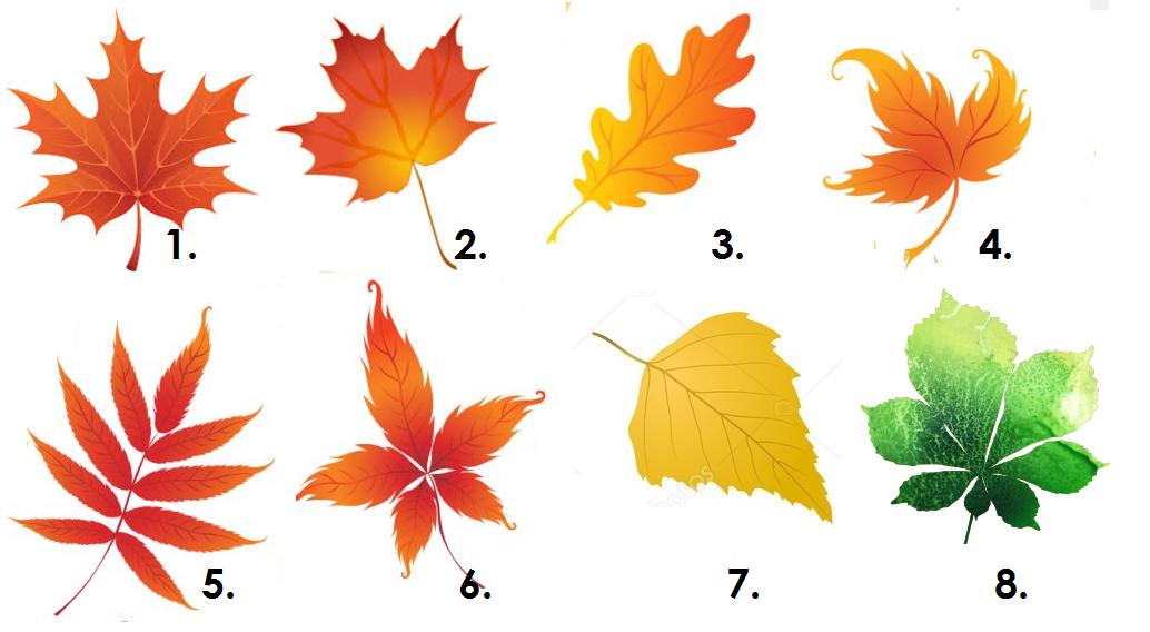 Izvēlies vienu lapu, un izlasi šī rudens ieteikumu tieši tev!