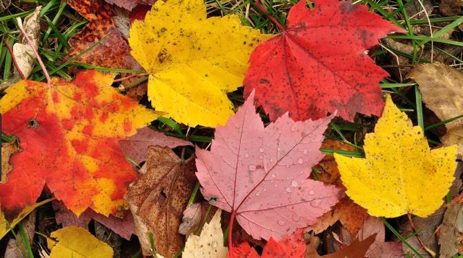 3 Zodiaka zīmes, kurām rudenī jābūt ļoti piesardzīgām – iespējama nelaime!