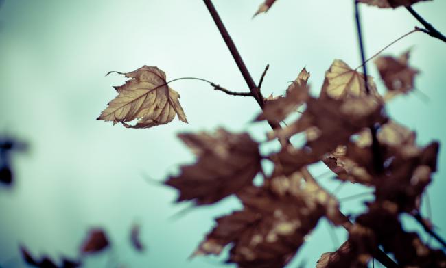 3 Zodiaka zīmes, kurām rudens būs smags laiks mīlestībā