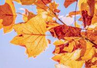 Dienas horoskops 29. oktobrim – pacenties nekaitināt apkārtējos!