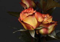 Romantisks noskaņojums! Mīlestības horoskops no 12. līdz 18. novembrim