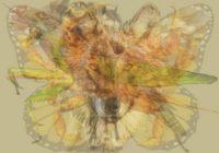 Tests: Pirmais dzīvnieks, kuru ieraudzīsi attēlā, atklās tavu patieso personību
